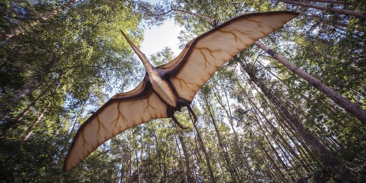 Flying dinosaur in forest